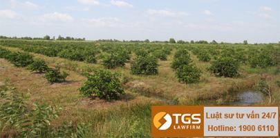 Trường hợp được giao đất nhưng không thu tiền sử dụng đất
