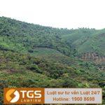Xử lý trường hợp tự ý chuyển đổi mục đích sử dụng đất rừng trái phép