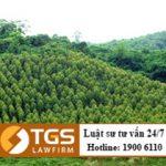 Điều kiện để chuyển nhượng đất rừng phòng hộ