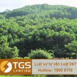 Hình thức xử lý hành vi tự ý nhận chuyển nhượng đất trong khu vực rừng phòng hộ