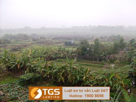 Làm thế nào đòi lại đất cho mượn lâu năm? – Công ty luật TGS