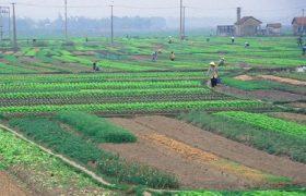 Muốn gia hạn sử dụng đất cầm làm những thủ tục gì?