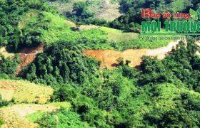 Trả lời độc giả Báo Bảo vệ rừng và Môi trường về vấn đề: Tra cứu sổ lâm bạ online